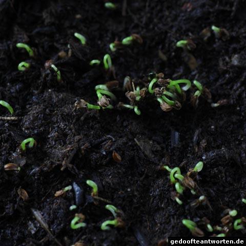pflanzenkinder